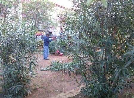Comunicato Stampa: Potatura e pulizia villetta a Piazza Turba