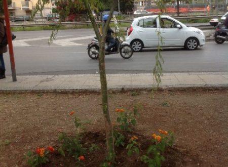 Comunicato Stampa: Gianluca, la scuola, l'albero della memoria