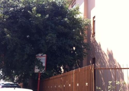 Comunicato Stampa: Alberi via Altofonte, è tempo di potatura