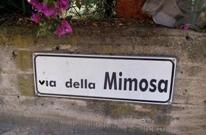 Via Della Mimosa, partono i lavori di rifacimento asfalto e gara d'appalto fognatura